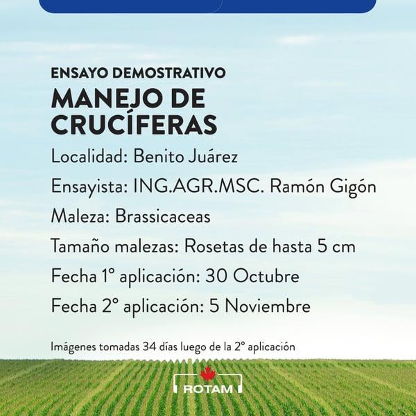 Manejo de cruciferas con Tuken - Rotam Argentina
